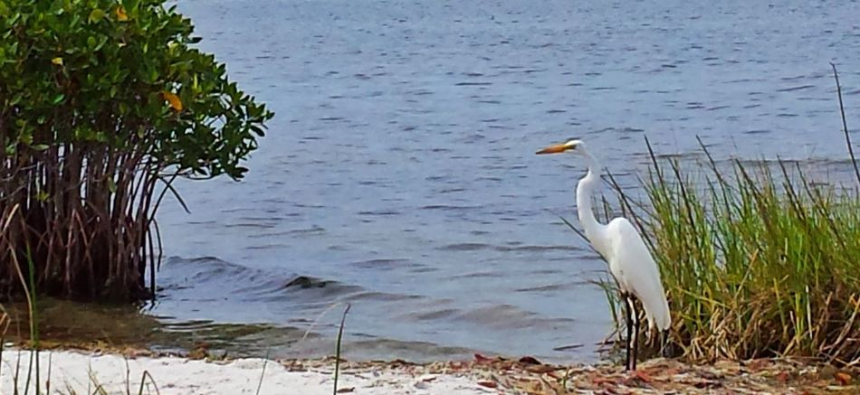 Heron At The River Indian River Lagoon Sebastian, Fl Florida Birds Florida Beauty