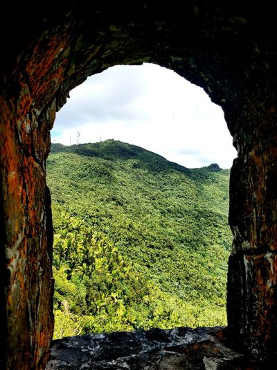 Nature Outdoors Sky Forest Trees Tropical Climate Tropical Rainforest Shadow Window EyeEmNewHere
