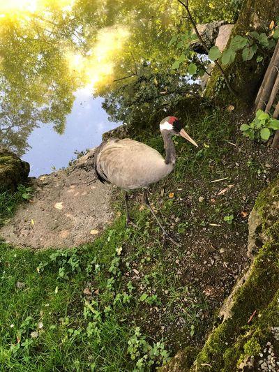 EyeEmNewHere IPhone IPhoneography Naturepark Animal Themes Animal Vertebrate Animal Wildlife Animals In The Wild Bird Plant Nature Water Grass Outdoors