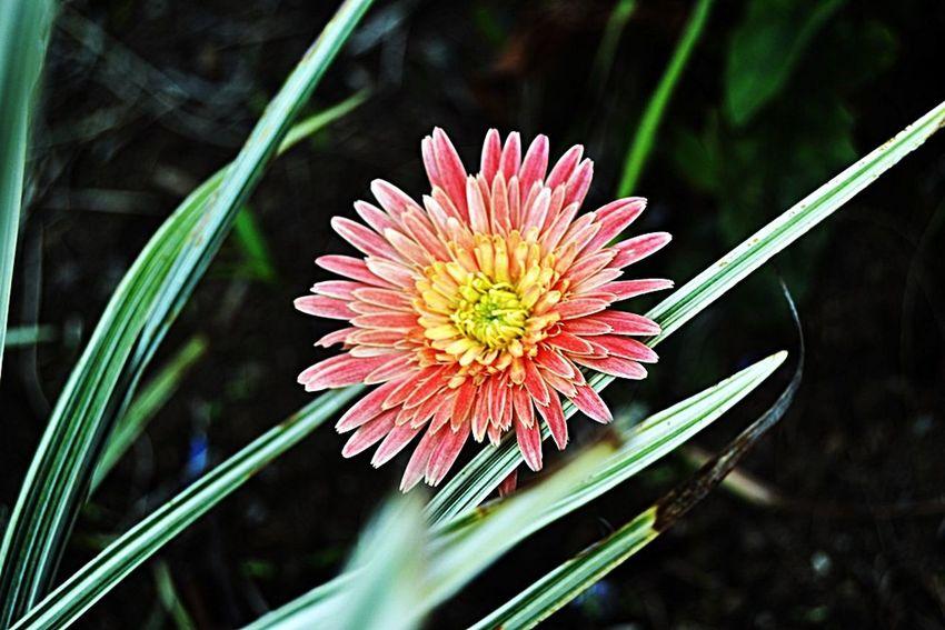 Amateurphotography Photography Relaxing BeautifulShot Beautifulflower  Beautiful Nature Flowerphotography Flower Nature Photography Forsaleph
