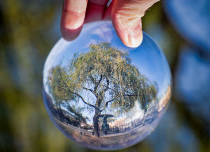 tree through crystal ball Sphere Glass - Material Transparent Outdoors Focus On Foreground Nature Plant Close-up Crystal Ball Human Hand Human Body Part Hand One Person Holding Human Finger Body Part Finger Day Reflection Responsibility Tree Spring