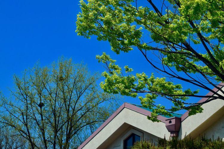 Blue Sky Green