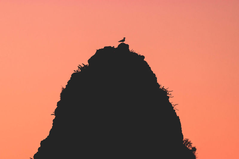 Seagull at sunrise Silhouette Sunset Sky Animal Themes Animal Bird Beauty In Nature Animal Wildlife Nature Vertebrate One Animal Orange Color Animals In The Wild Rock Copy Space Rock - Object Solid Outdoors Scenics - Nature Standing Mountain Peak Seagull Sea Wildlife