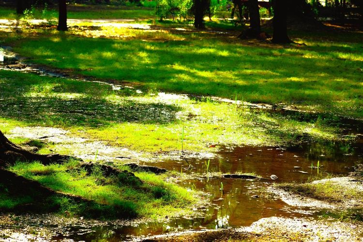Wallpaper Tree Water Shadow Sunlight Grass Standing Water Tranquil Scene Calm Scenics Tranquility