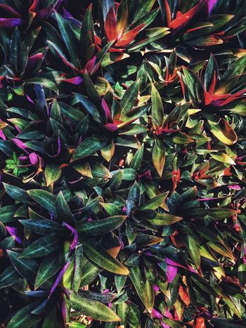 colors of life Colors Plants Leaves Garden Purple Red Orange Beauty Beautiful Nature Stunning Colours Shadows Gardening Leaveschangingcolors Taking Photos Enjoying Life Helloworld Holiday Trip Physcodelic Trippy Showcase March