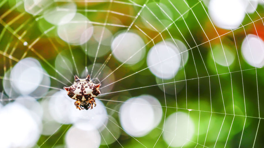 Spider in a web Animal Themes Animal Wildlife Animals In The Wild Beauty In Nature Close-up Day Focus On Foreground Fragility Insect Nature No People One Animal Outdoors Spider Spider Web Web Perspectives On Nature