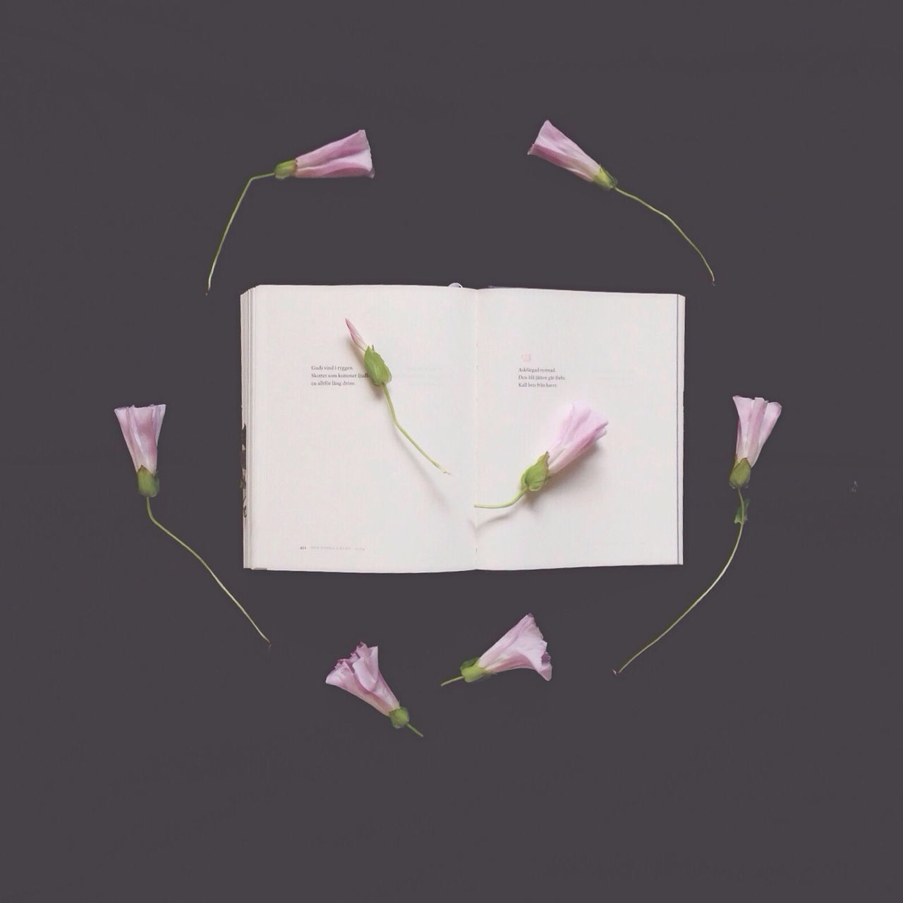 Directly Above View Of Pink Flowers With Open Book On Black Background