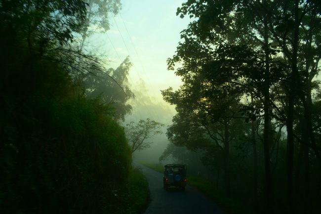 Landscape Road Safari Jeep Jungle Amazing Morning Creativity Light And Shadow Morning Sky Mornings Adventure Joyfull Trees