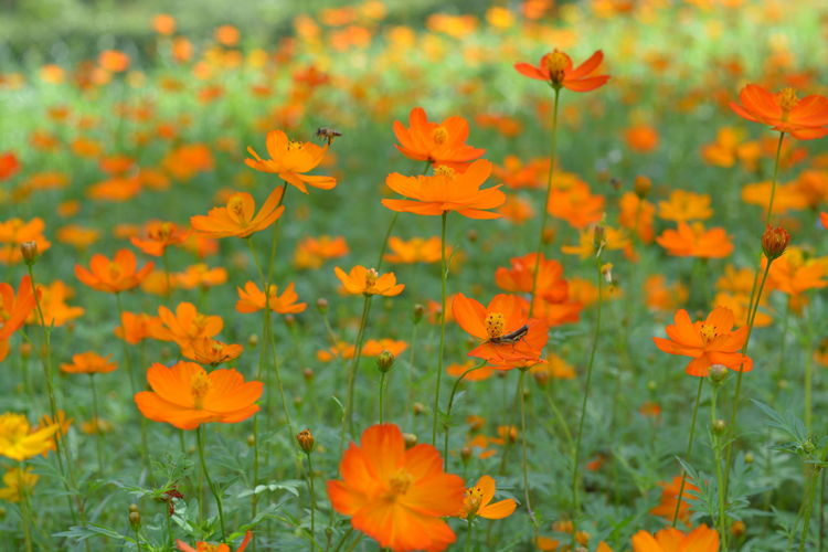 Flower Plant Orange Color Nature Growth Flower Head Meadow Beauty In Nature Day Field Tranquility Petal Summer Grass Outdoors Rural Scene No People Beauty Landscape Nature Reserve