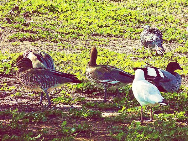 Birds Bird Photography Australian Wildlife