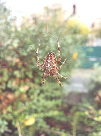 Spider Web Nature Spider Beauty In Nature Fragility Web Outdoors Focus On Foreground Close-up No People Day One Animal Animal Themes Survival