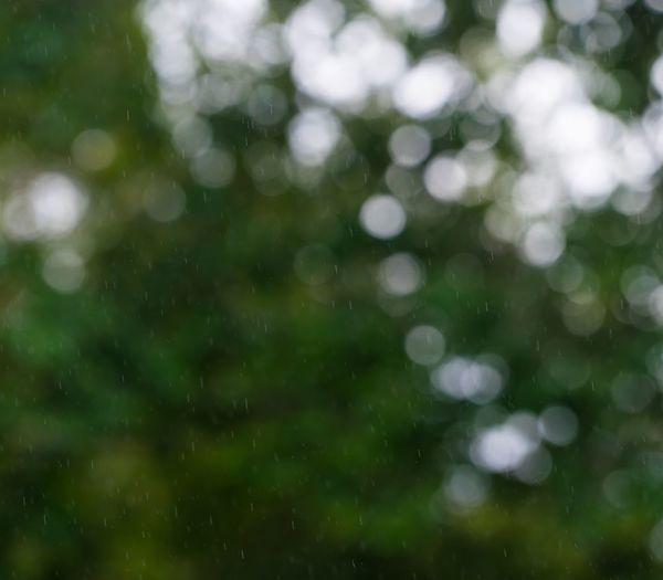 Rain Rainfall Raining Backgrounds Beauty In Nature Day Defocused Freshness Full Frame Green Color Nature No People Outdoors Rainy Day Water