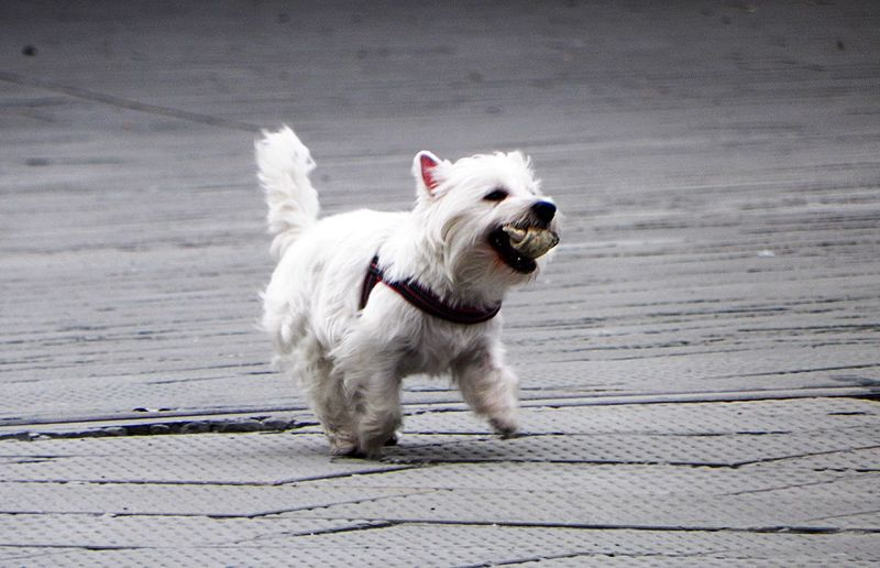 Showcase March Dog Playing Streetphotography Walking Around From My Point Of View Italy Italia Trieste No Filters  Running TriesteSocial Animals Animal Gettyimages Getty Images Getty & Eyeem Taking Photos Things I Like Enjoying Life