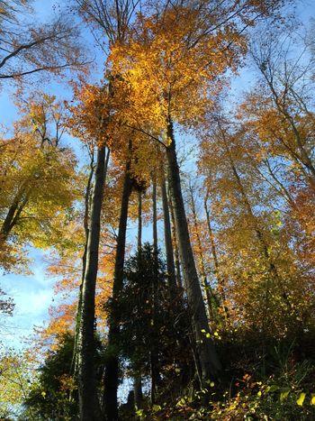 Trees in Switzerland