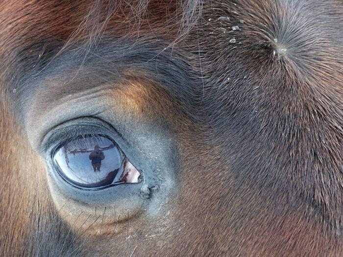 Outdoors Snow Horse Trotter Mirror Sonydschx400v Eye Brown Meandmyhorse Winter Bayern Germany