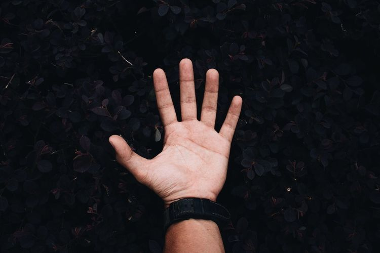 Cropped image of man hand against plants