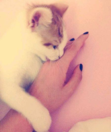 Kedi korkum gecti sanirim 😺😼😻😹 Cat♡ Carzy Hello My Cat