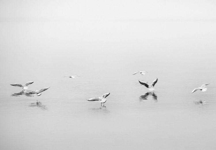 Seagulls over