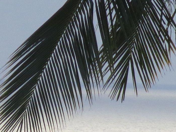 "Palm Leaves"""