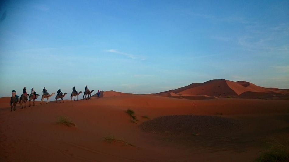 Deserts Around The World Enjoying The Sun Desert Camels Moroccan Sahara Camel Riding Bereber Morocco Photooftheday Discover The World DunesTaking Photos Enjoying Life Nature_collection Sahara Animal Photography Hello World Ihaveadream WishesDoComeTrue Newday Newway Dunes Of Merzouga