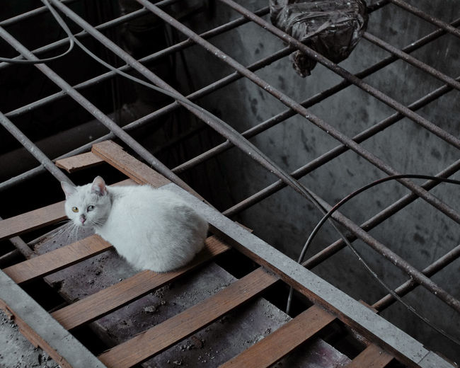 High angle view of cat sitting on metal