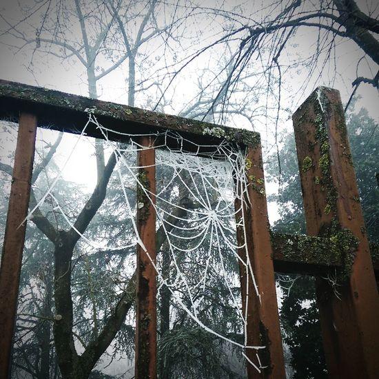 Quando i ragni giocano a Frozen... Spiderweb Spiderweb Traps Spiderweb Winter Winter Ice Day❄ Winter Is Coming