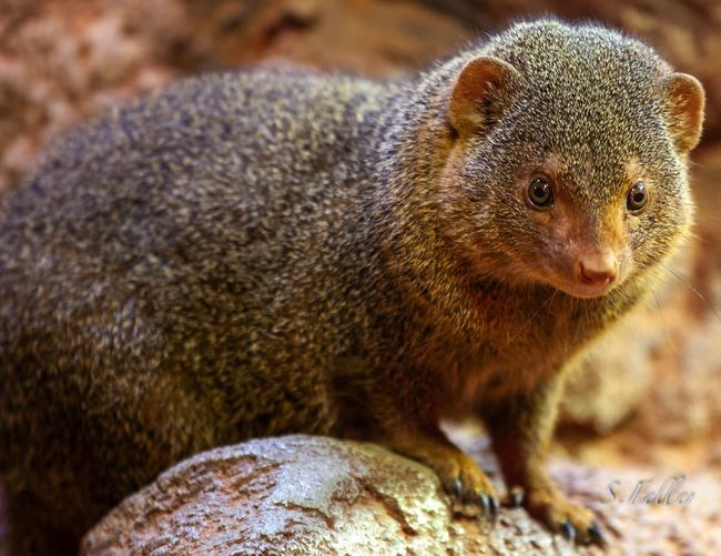 Animal Themes Animal Animal Wildlife Mammal One Animal Animals In The Wild Rock No People Close-up Rock - Object Solid Nature Rodent Focus On Foreground Day Vertebrate Outdoors Brown Portrait Looking Away Whisker Hamburg Hagenbecks Tierpark Hamburg  EyeEmNewHere