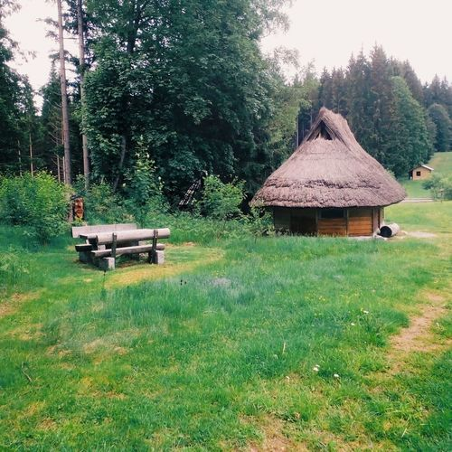 Hut Forest Great Atmosphere Green Forests Relaxing Time