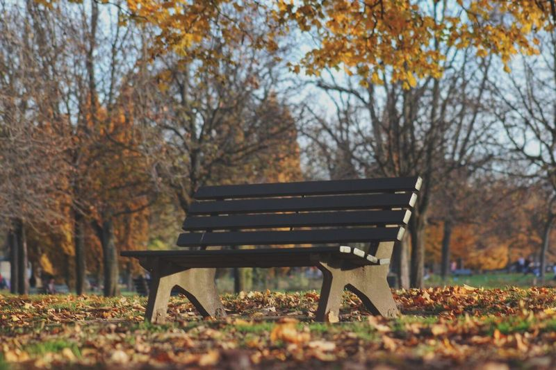Autumn Bench Tree Park Bench Leaf Nature Sitting Fallen No People Outdoors Beauty In Nature Day Lyon France EyeEmNewHere