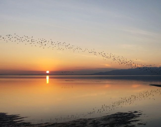 Birds Flying Over Sea Against Sky During Sunset
