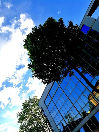 Tree Low Angle View Growth Outdoors Building Exterior Architecture No People Cloud - Sky Blue Built Structure Nature City Day Sky
