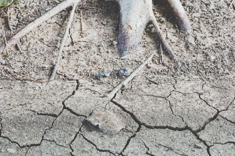 Cracked Arid Climate High Angle View Textured  Close-up Dried Muddy Bad Condition Soil Dry Dried Plant Drought Namib Desert Fallen Leaf Dead Plant Leaves Young Plant Run-down Weathered Civilization Decline Deterioration Model Tire Track Arid