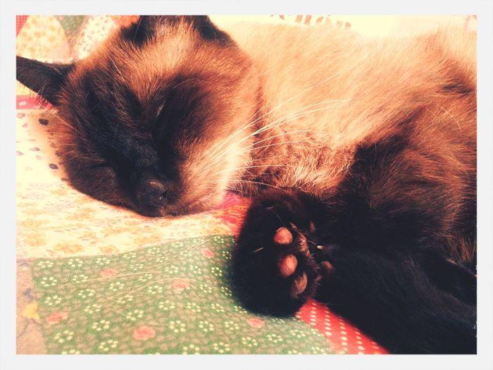 Menomale Che C'è Lei Mykitty Cats Of EyeEm Ilovemycat