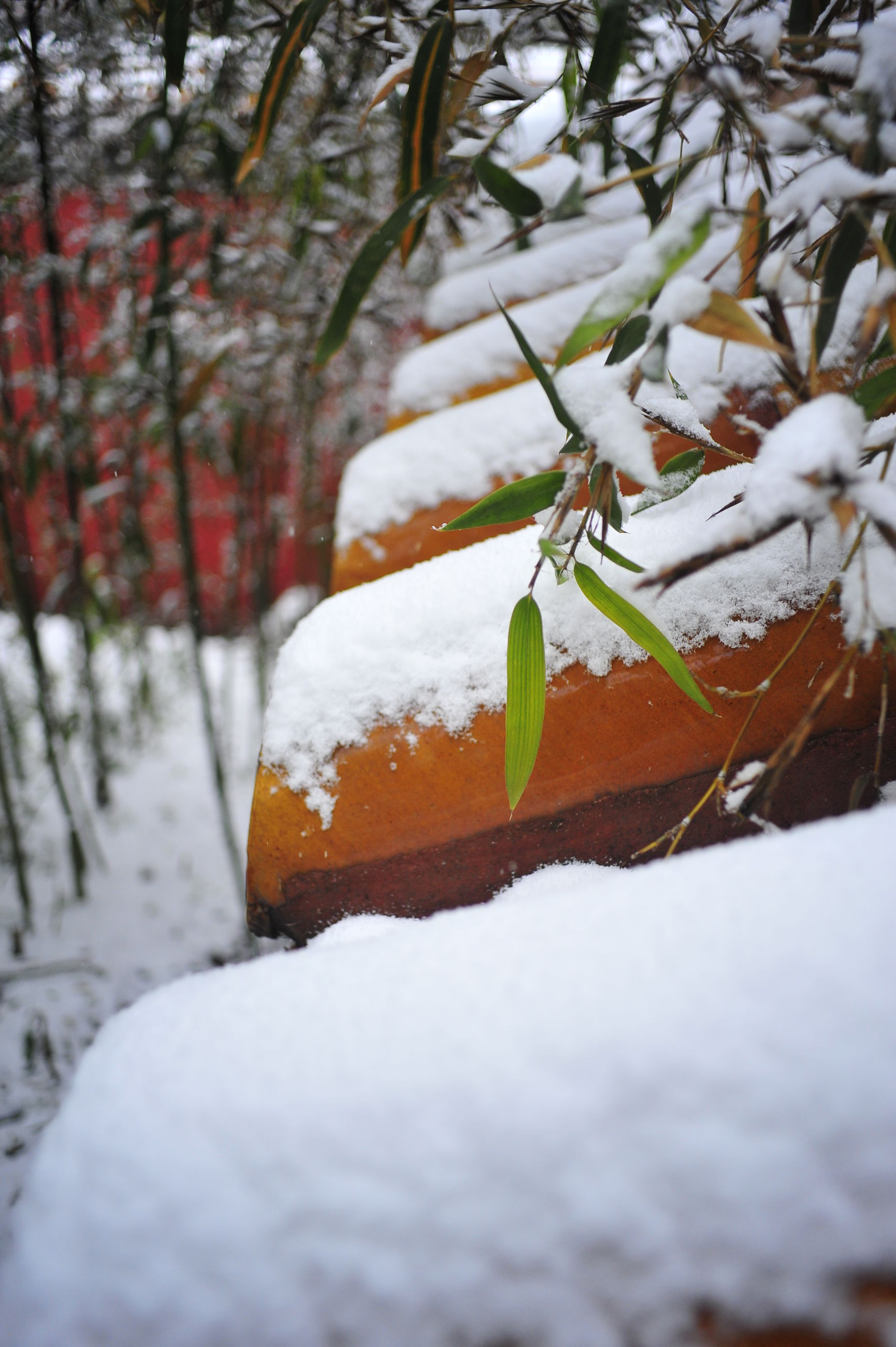 season, tree, focus on foreground, cold temperature, winter, nature, selective focus, close-up, leaf, snow, growth, covering, tree trunk, day, autumn, outdoors, branch, wood - material, frozen, no people