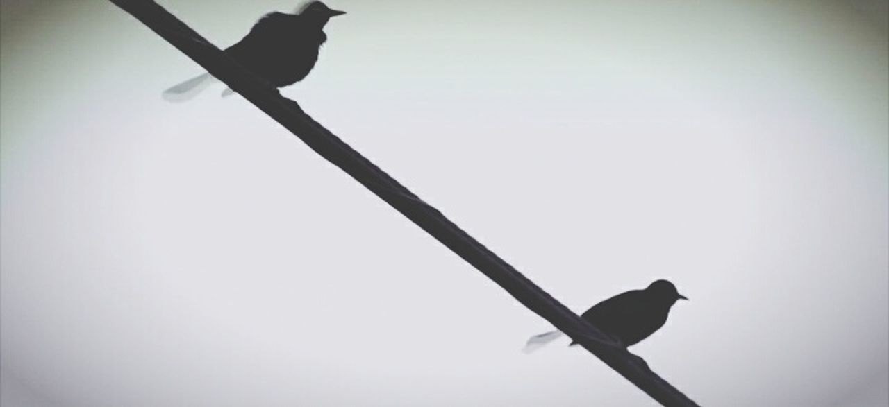 bird, animals in the wild, one animal, perching, animal wildlife, animal themes, silhouette, raven - bird, day, no people, outdoors, nature, sky