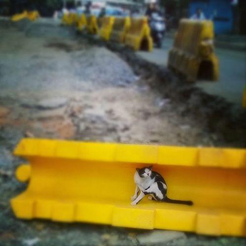 Meowllow-Yellow! Chillingcat Meow Mumbai Yellow roadsideromeo catsofinstagram ilovecats cat instapic instacat