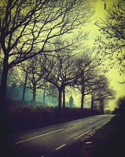 Trees Road Countryside Landscape Nature Sky And Trees No People Tree Outdoors Nature Sky Day