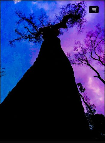 A Tree In The Forest Mountain INDONESIA