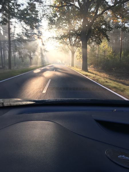 Mystical morning Morning Light Morning Sun Light Transportation Car Mode Of Transportation Motor Vehicle Windshield Vehicle Interior Glass - Material Road Tree Nature on the move Autumn Mood