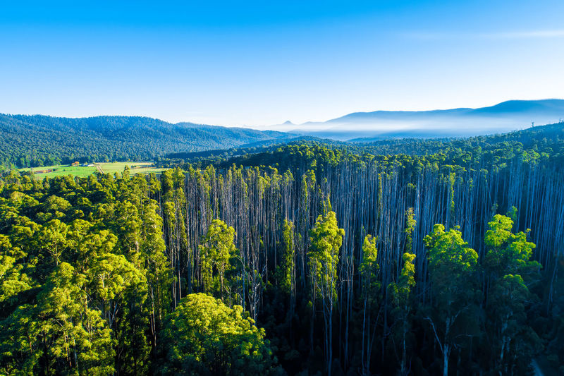 Scenic eucalyptus forest and mountains in Australia Anderson Mill Forest Green Color Growth High Up Horizon Landscape Marysville National Park No People Non-urban Scene Plant Sky Tranquil Scene Travel Locations Aerial Australia Background Bare Trees Beautiful Beauty In Nature Day Drone  Environment Lookout Mountain Nature Outdoor Outdoors Scenic Scenics Travel Travel Destinations Trees Victoria View Yarra Ranges