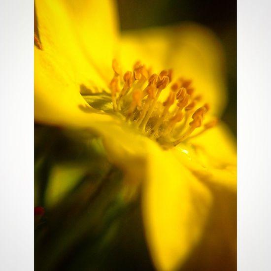 макро фотонателефон моифото учусьфотать MyPhotography Photo Phone Macro Likeforlike Flowers Vscocam