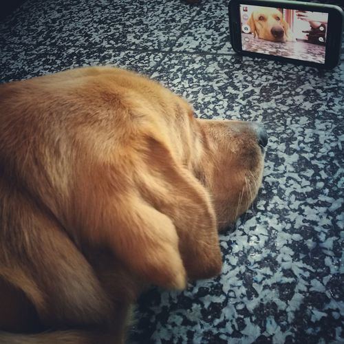 Selfie ✌ Self Portrait Around The World Selfshot Pets Dog Relaxation Selfies! Pet Portraits