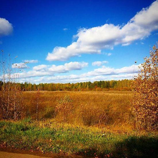 Обожаю осень, за её красоту! осень золотаяосень Листочки листва поле Лес небо облако деревня вдеревне