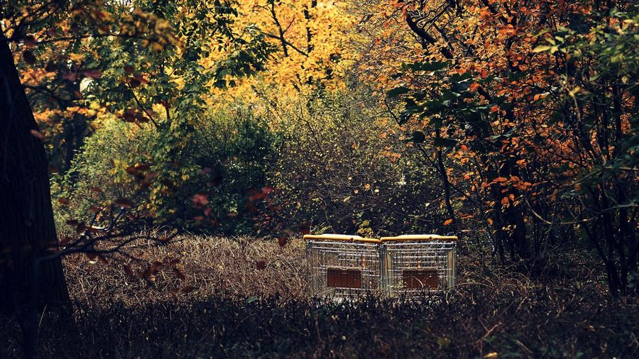 Together Autumn Day Nature No People Outdoors Shopping Cart Tree