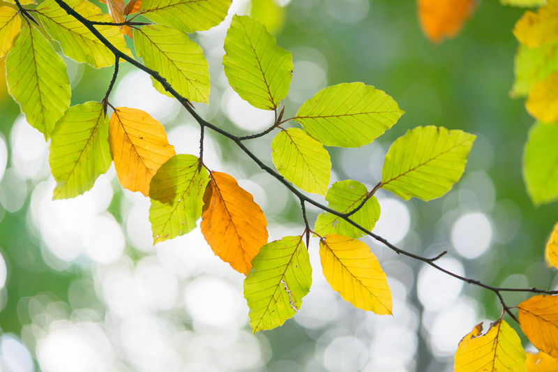Leaf Nature Outdoors Day Branch Beauty In Nature No People Fruit Plant Tree Growth Freshness Defocused Sky