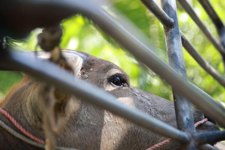 Close-up of an animal pen