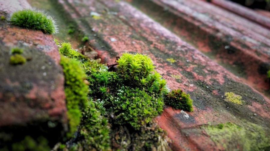 Moss Green Roof Tile First Eyeem Photo
