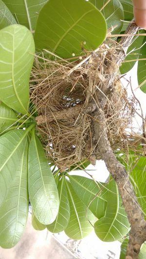 Ninho vazio... Nest Empty Roraima