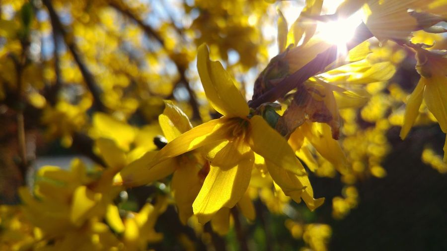 Low angle view of yellow flowers