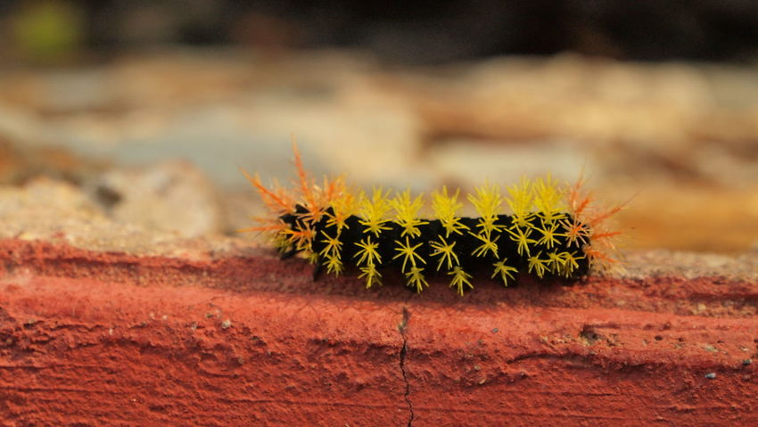 nature in the same colour as its surroundings. a spiky little thing! Mexico San Jose Del Pacifico Caterpillar Eye Em Nature Lover